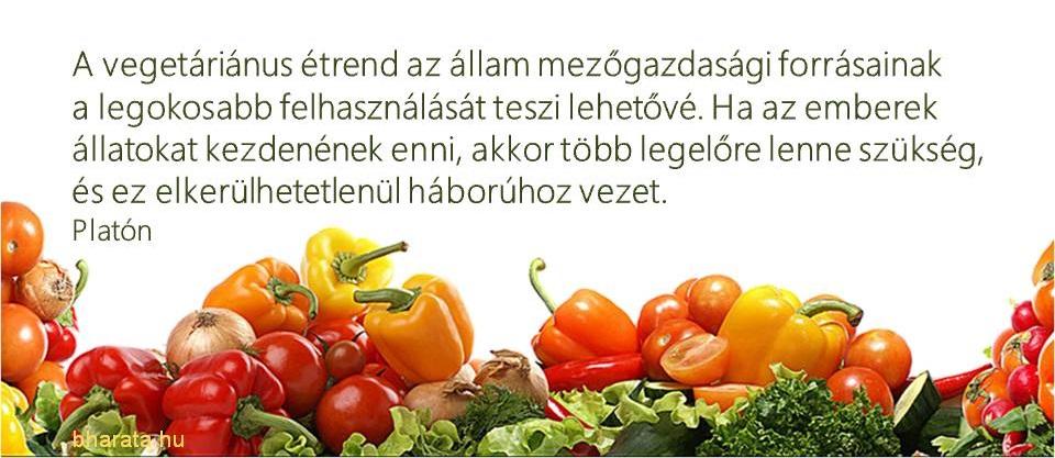 Platon idézet a vegetáriánus étkezésrőlt a vegetarianus eletrol